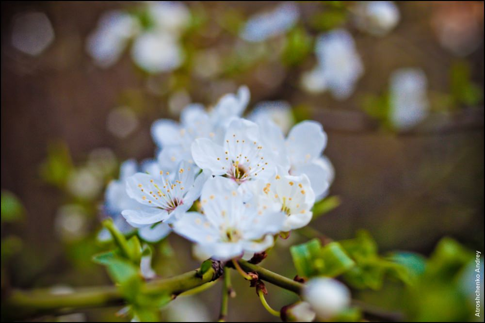 весна в нижнем новгороде